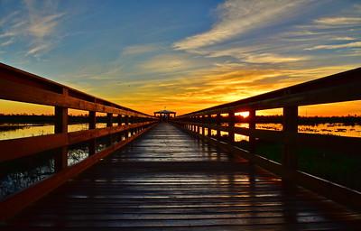 Cattail Marsh:  Terrell Park, Beaumont, TX 2017