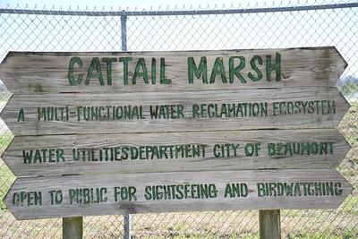 Cattail_Marsh_Terrell_Park_Beaumont__750_0410_resize