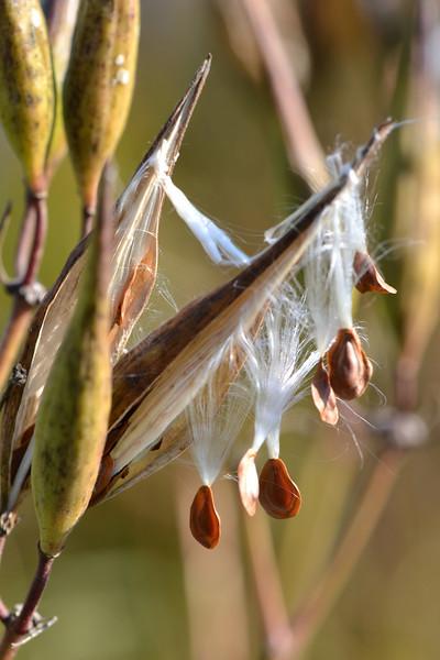 Cattails, Milkweed & Spanish Moss