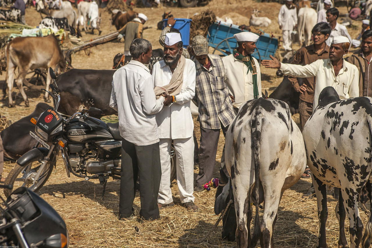 Men engaged in deal at cattle fair at Rajur, Maharashtra, India