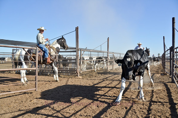 Foster Feedyard - Working Cowboys