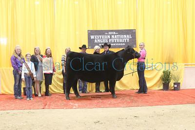 146_champ_owned_intermediate_heifer