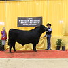 57_champion_intermediate_bull_0334