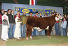 "<b>Lot 15 - BR Currency 8144 ET Breeding Package</b> Offering a breeding package on BR Currency 8144 ET. Package includes 20 straws of semen and 10 certificates. ""Currency"" was the 2010 National Western Grand Champion Bull. His dam, Gabrielle, was a two-time Denver champion.  For more information contact Dale or Mary Barber at 806-235-3692. Donated by Barber Ranch - Dale and Mary Barber and Family, Channing, TX <b>Purchased by Curtis and Jackie Castle, Crawford, OK for $1,300.00</b>"