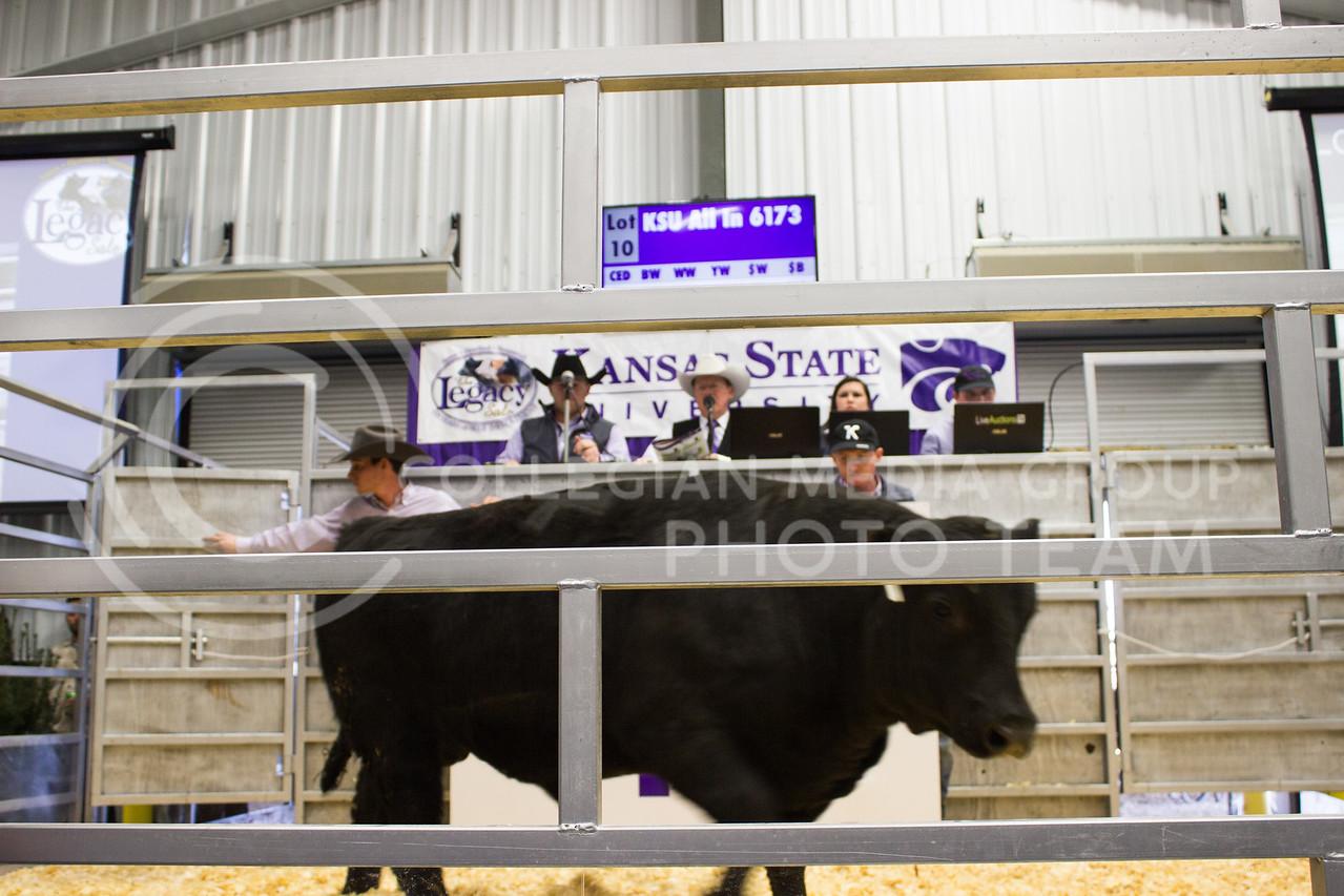 2017 Legacy Bull Sale
