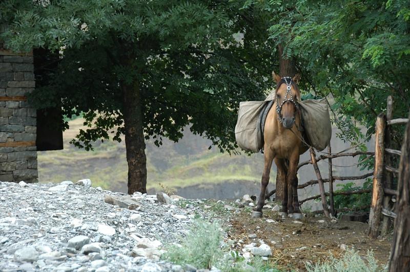 Horse Tied Up with Decoration - Lahic, Azerbaijan