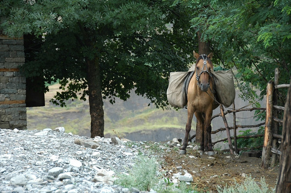Horse Tied Up with Decoration - Lahic, Azerbaijan