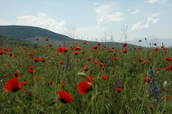 Wildflower Fields - Alkatsikhe, Georgia