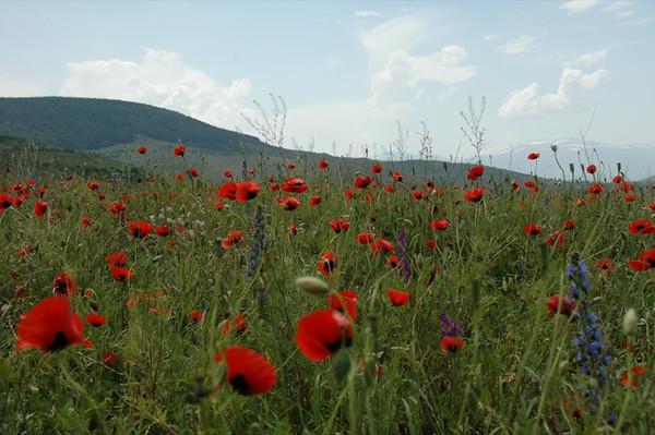 Wildflower Fields - Alkatsikhe, Georgia