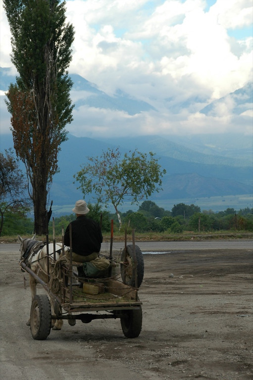 Man on a Donkey Cart - Kakheti, Georgia