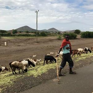Cavalier Travels: Tanzania 2018