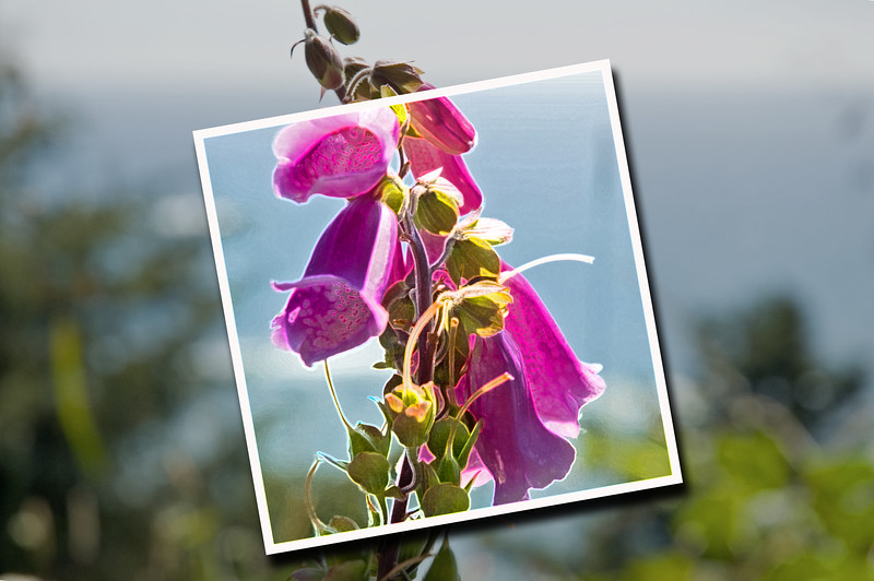 ND70_2005-07-15DSC_1758-PurpleFlowerCloseup-nice-SnapshotEffect-AccentEdges-4_edited-1