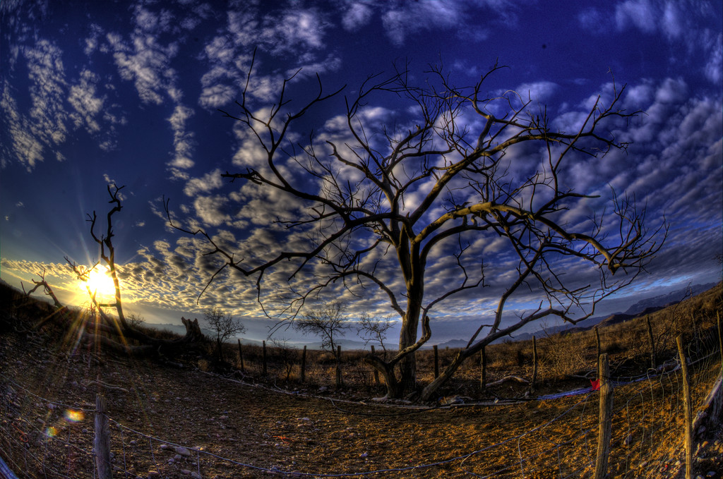 Extreme drought drys up even the most hardy trees.