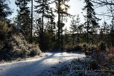 047-Mabie-Forest-Snow-(2)