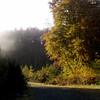 012-Mabie-Forest-Haze