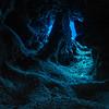 Grand Cayman Cavern