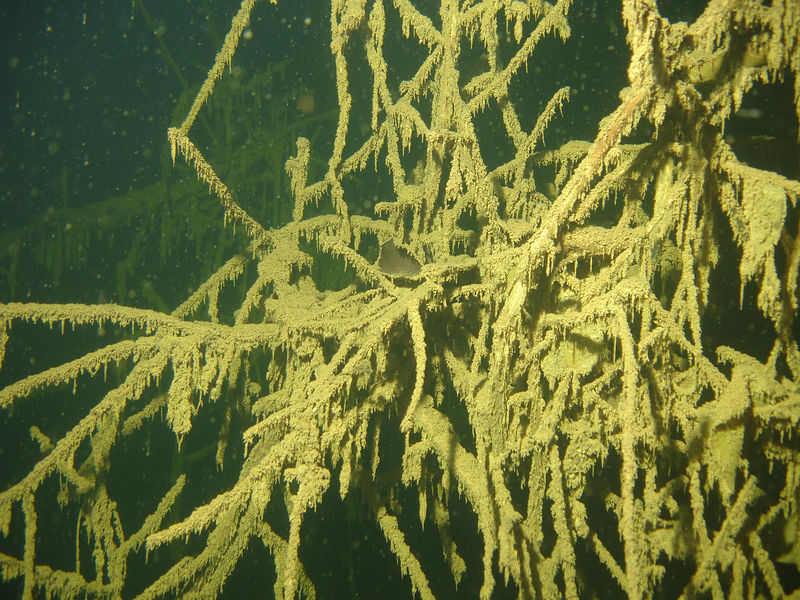 Delicate branches of submerged trees covered in fine silt