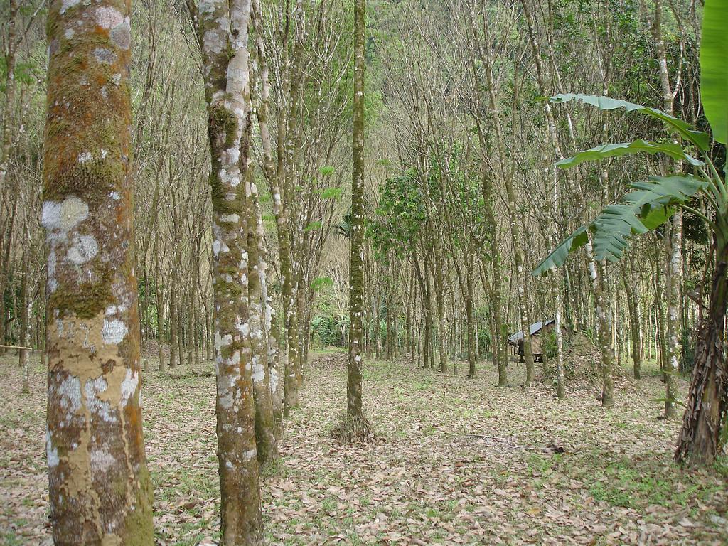 Plantation and then jungle hide enterance to Tham Thong Lang