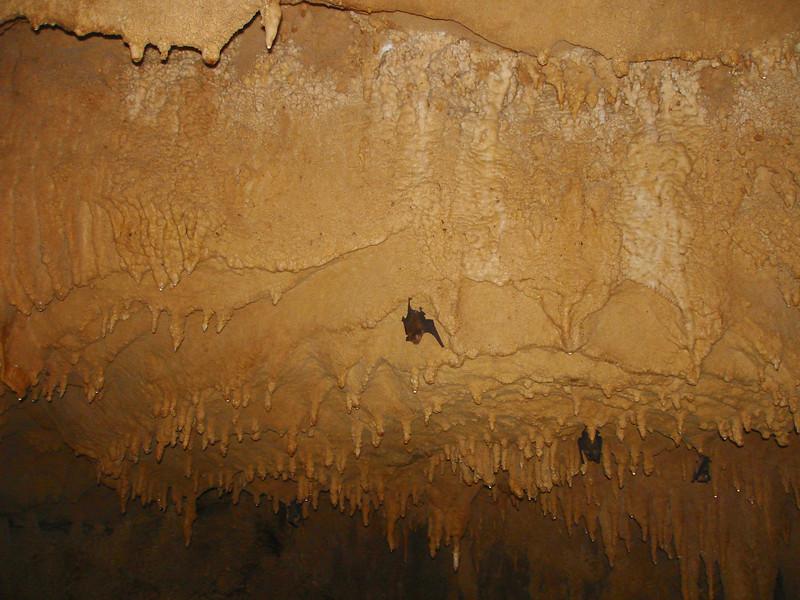 Bats in Tham Luem