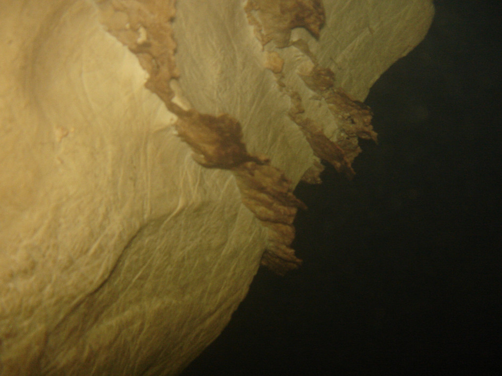 Underwater picture of the cave wall in Tham Sa Yuan Thong - taken just to prove how surprisingly clear the cave visibility is.