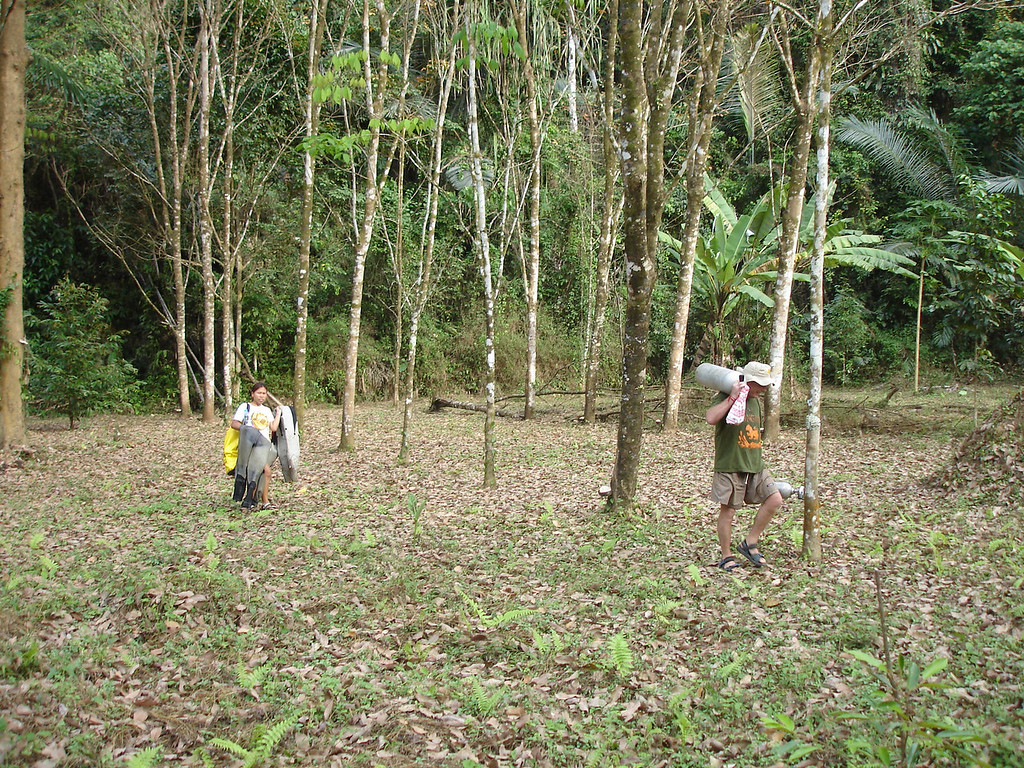 I hike through rubber tree plantation and jungle to get to Tham Thong Lang cave enterance