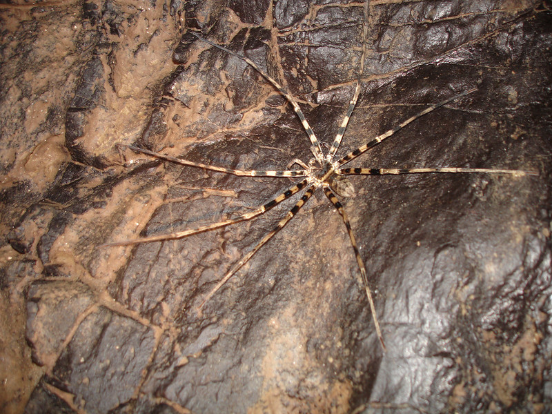 Big ugly spiders and cricket type insects live throughout the cave