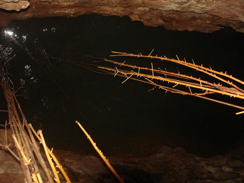 Tree roots reach all the way down to water running along cave floor