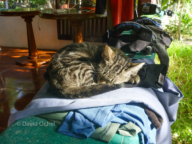 Jungle kitten chose - of course - my dried out towel and underpants for a resting place. ;-)