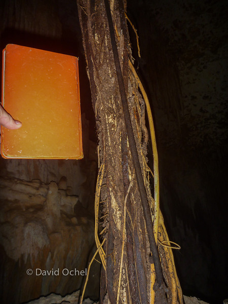 Roots coming through the ceiling. Book for scale.