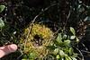 A nest.