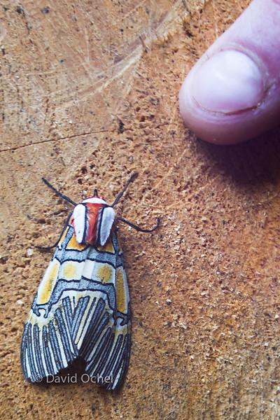 Pretty moth.