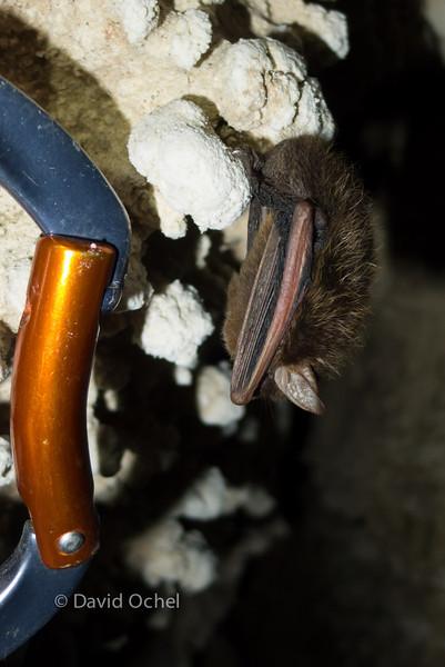 Bat with 'biner.
