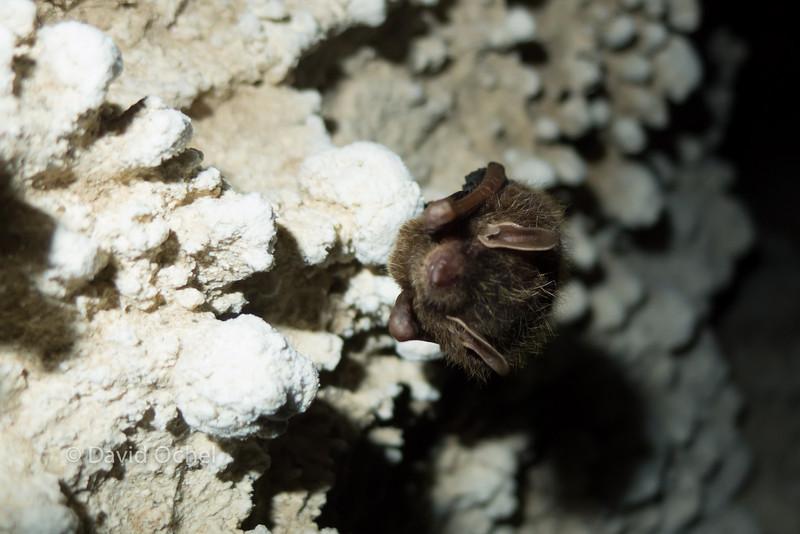 Tiny bat.