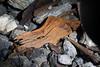 Decomposing wood.