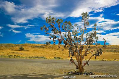 395 Shoe Tree,