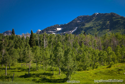 Alpine environment on the way to Cascade springs, Timpanogos Nat. park.