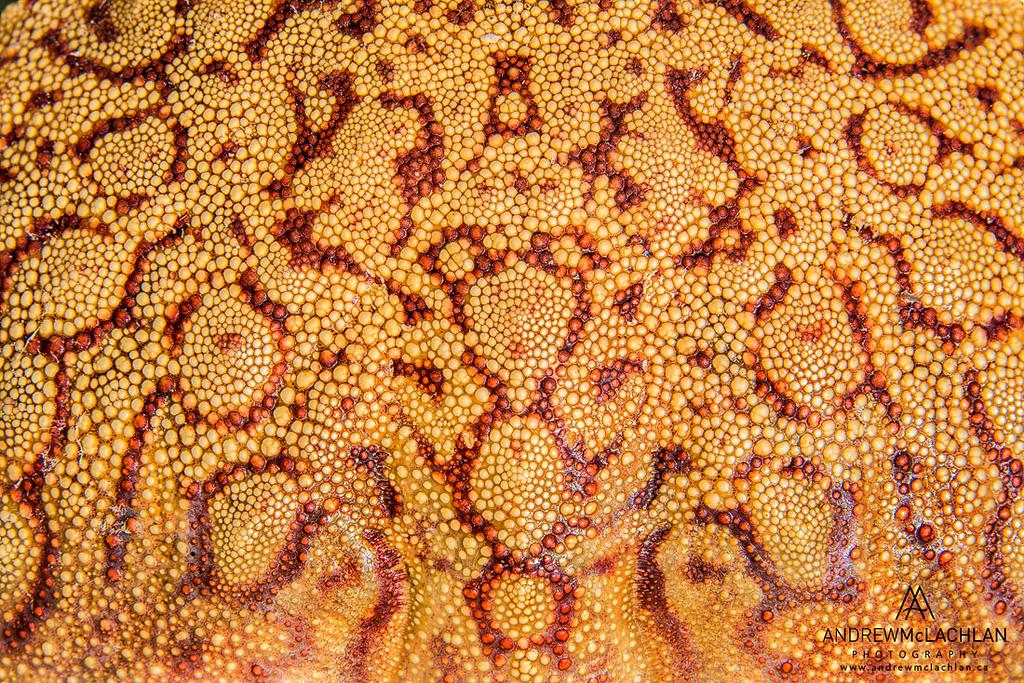 Crab Shell Details, Cayman Brac, British West Indies