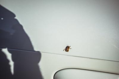 Bees love GT4s
