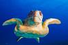 20121225_cayman_4522