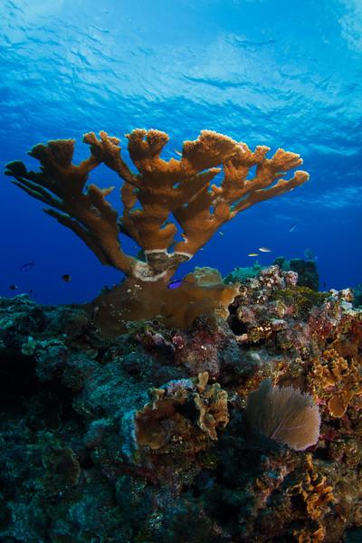 20140401_Grand_Cayman_0690