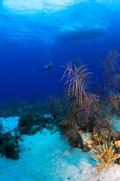cayman-apr2012-79