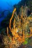 cayman-apr2012-30