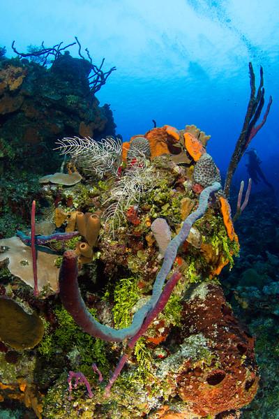 20140818_Grand_Cayman_0321