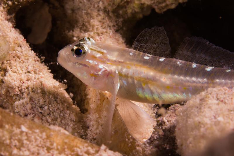 Cayman0812-0891