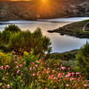 whale rock sunset flowers 0658-