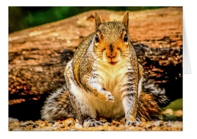 squirrelcard 1