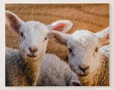 sheep jigsaw 1