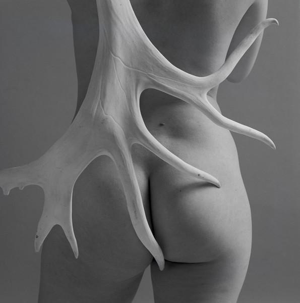 antler back cecilia bk8-Edit