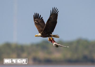 Nature is Brutal - Cedar Key Florida - Photo by Pat Bonish