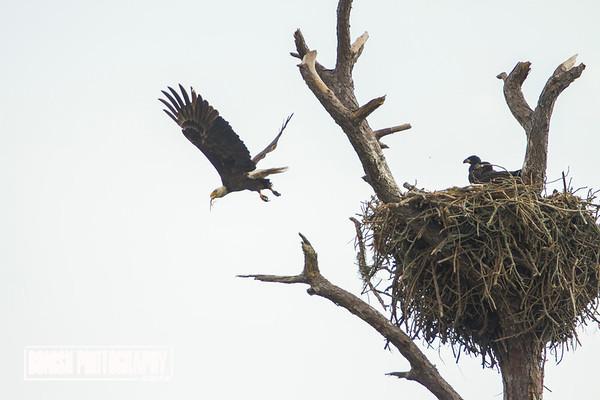 Leaving the Eagles Nest - Cedar Key Florida - Photo by Pat Bonish